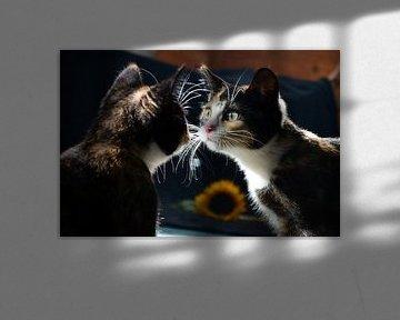 Spiegelbild (Kätzchen) von Aafke's fotografie