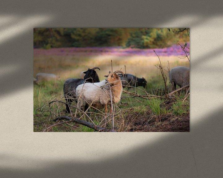 Beispiel: Schafe auf der Heide von Tania Perneel