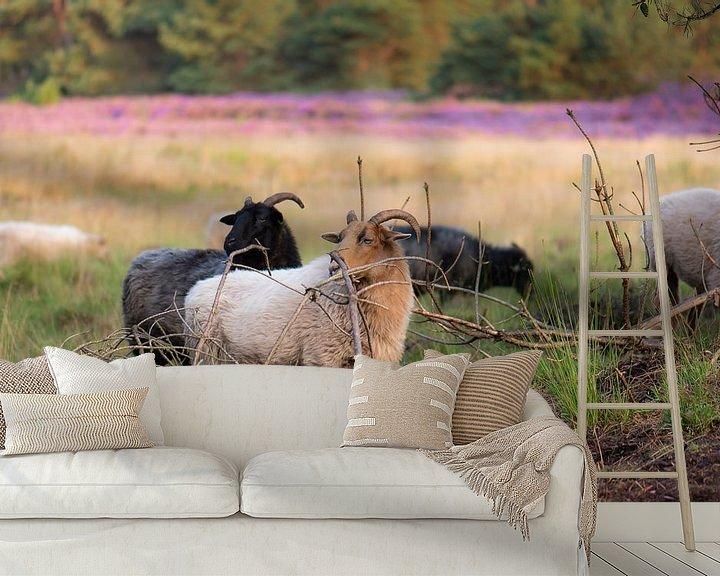 Beispiel fototapete: Schafe auf der Heide von Tania Perneel