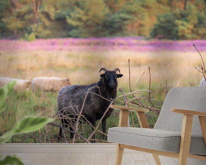 Beispiel fototapete: widder auf die Heide von Tania Perneel