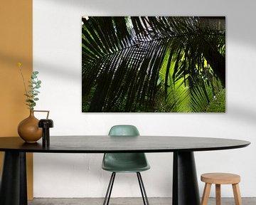 Tropisches Vordach in Suriname von rene marcel originals