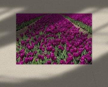 Paarse Tulpen von Menno Schaefer