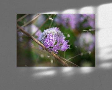rosa Sommerblume von Tania Perneel