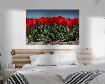 Rode tulpen von Menno Schaefer