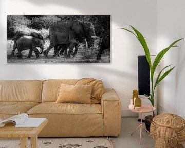 Wüstenelefanten von Joris Pannemans - Loris Photography