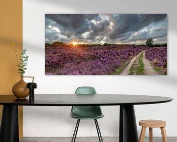 Lande fleurie sur la Gasterse Duinen sur Arthur Puls Photography