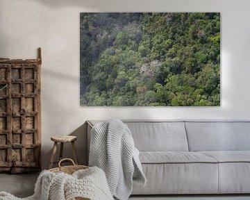 Tropischer Regenwald von Suriname von rene marcel originals