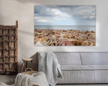 Strand voller Muscheln