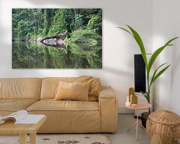 Sipaliwinirivier Suriname van rene marcel originals