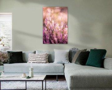 Blühendes violettes Heidekraut bei Sonnenaufgang von Evelien Oerlemans