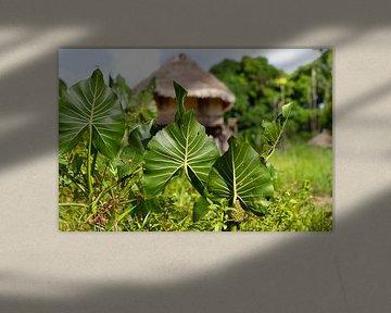 Vegetation in einem Heimatdorf in Suriname von rene marcel originals