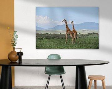 Giraffen von Robert Styppa