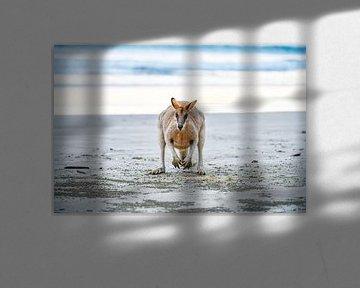 Känguru am Strand von Robert Styppa