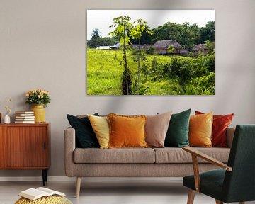 Dorfszene in Kwamalasamutu von rene marcel originals