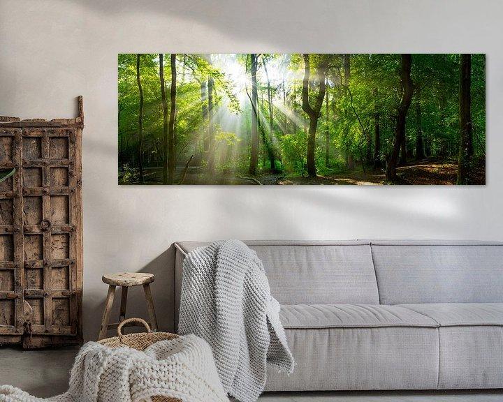 Sfeerimpressie: Bospanorama met zonnestralen van Günter Albers