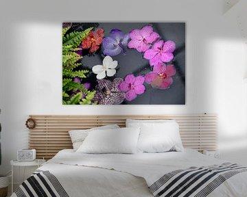 bunte Blumen im Wasser von Carmela Cellamare