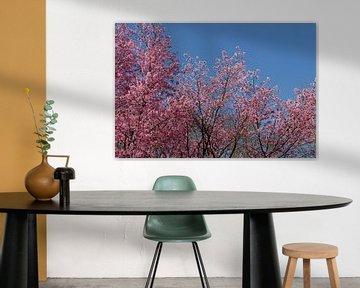bomen met roze bloesem en blauwe lucht van Carmela Cellamare