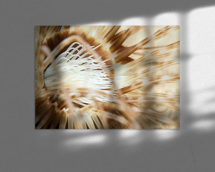 Sfeerimpressie: Ceriantharia van Enak Cortebeeck