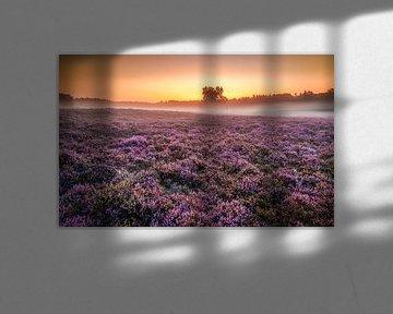 Blühende Heide bei Sonnenaufgang mit Nebel von Jenco van Zalk