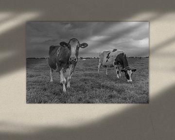 Neugierige Kuh schwarz-weiß auf der Wiese von Yvonne van Driel