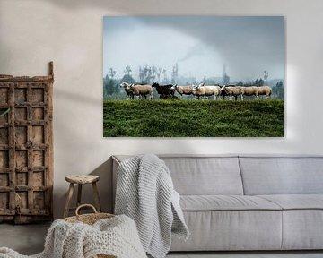 Moutons dans le parc national de Biesbosch sur Eddy Westdijk