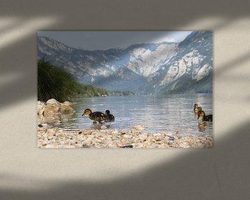 Kleine Entchen am Rande des Sees von Bohinj von Steven Marinus