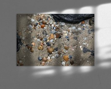 schelpen op het strand van westkapelle in zeeland