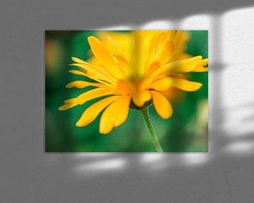 Gelbe Blume von Li Wa