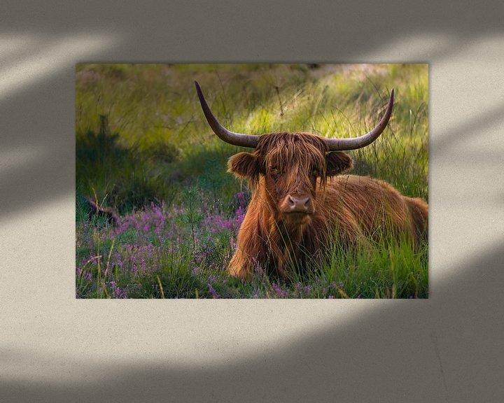 Sfeerimpressie: Hooglander in de heide van Laura Drijfhout