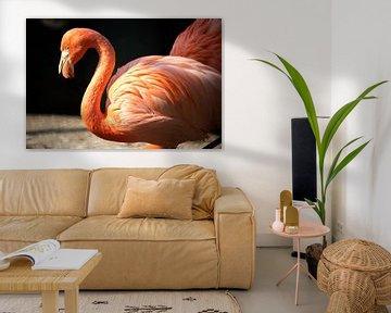 Flamingo van Marcel van Laar