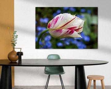 Blume von Marcel van Laar