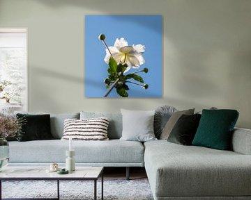 Unterseite aus weißem Asternstoff von Tania Perneel