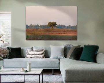 eenzame boom op de hei van Tania Perneel
