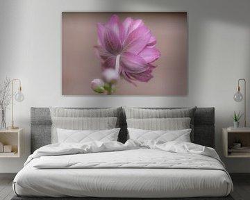 Rückseite rosa Sternchen von Tania Perneel