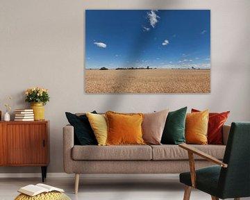 Weizengebiet an einem sonnigen Tag in der Provinz Victoria, Australien von Tjeerd Kruse