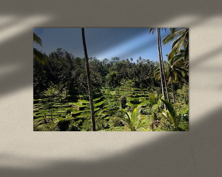 Sfeerimpressie: Rijst terrassen in de omgeving van Ubud. van Tjeerd Kruse