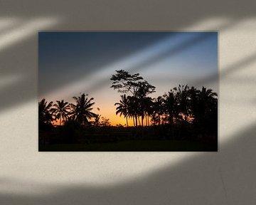 Silhouet van kokosnotenpalmen in de zonsondergang van Bali, Indonesië van Tjeerd Kruse