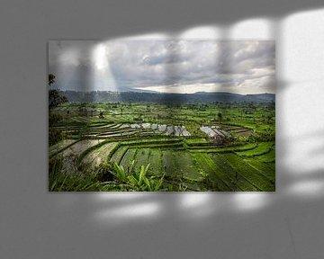 Verbazingwekkende rijstterrasvelden en enkele palmbomen rond, Ubud, Bali, Indonesië van Tjeerd Kruse