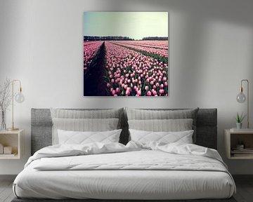 pink perspective van bob van den berg