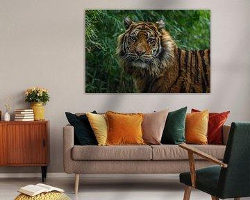 Sumatraanse Tijger is watching you van Arisca van 't Hof