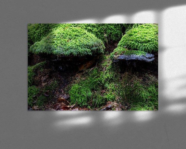 Beispiel: Mit Moos bedeckte Pilze. von Anjo ten Kate