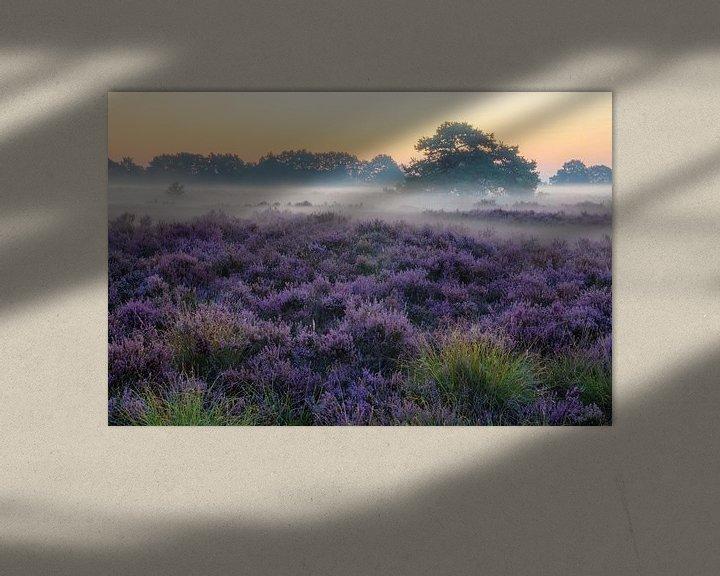 Beispiel: Drenthe Moor, Exloo von Rene Mensen