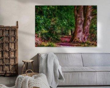 forêt enchantée sur Joerg Keller