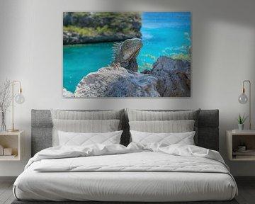 Iguana @ Playa Lagun Curaçao van Maikel van Willegen Photography