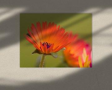 Fleur VI - Bloemen van Herma Egberts