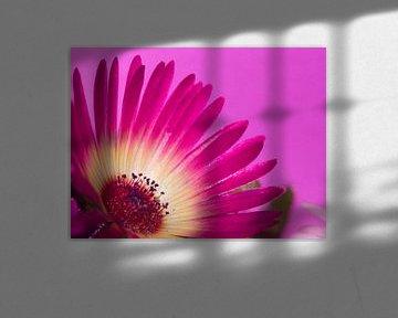 Fleur IX - Blumen - Blumen von Herma Egberts