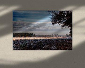 Herfst op de Veluwe heide van Tim Annink