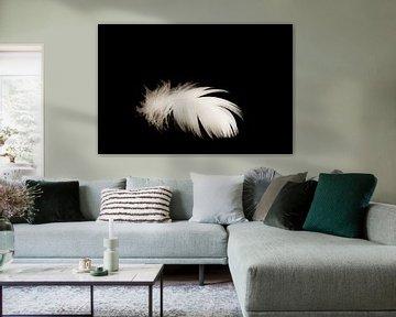 Produktfotografie weiß-schwarz von Diana Edwards
