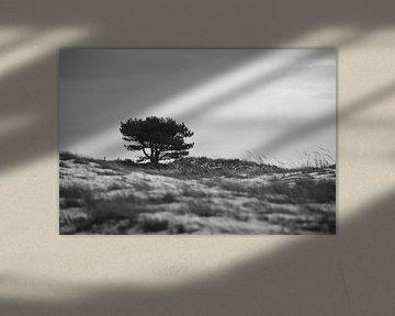 Boom in de duinen van Mariska Hofman