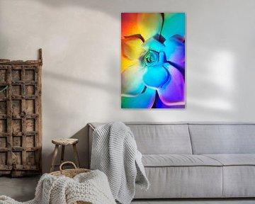 Echeveria met prisma regenboog effect